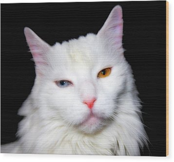 Wood Print featuring the photograph Turkish Angora by Aurelio Zucco