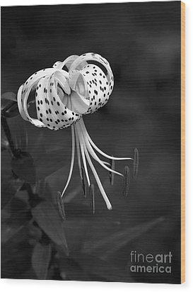Turk's Cap Lily In Black And White Wood Print