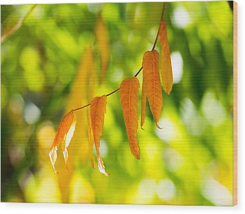 Wood Print featuring the photograph Turning Autumn by Aaron Aldrich