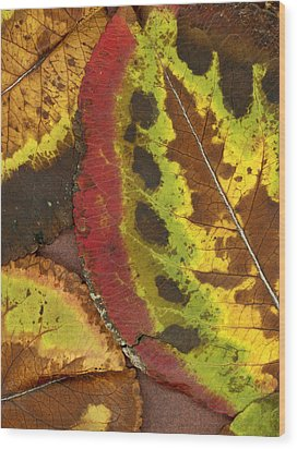 Turning Leaves 3 Wood Print by Stephen Anderson