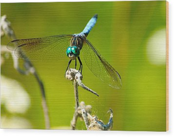 Turquoise Dragonfly Wood Print by Lorri Crossno