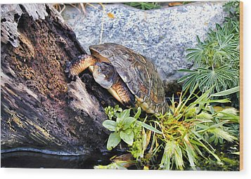 Wood Print featuring the photograph Turtle 1 by Dawn Eshelman