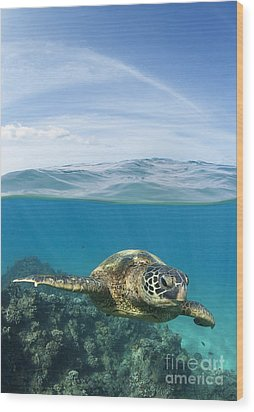 Turtle At Black Rock Wood Print