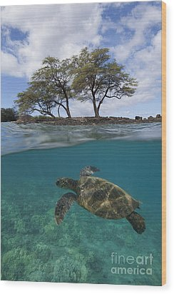 Turtle At Makena Landing Wood Print
