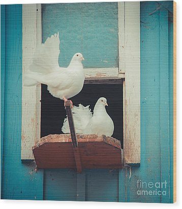 Turtle Doves 1x1 Wood Print by Hannes Cmarits