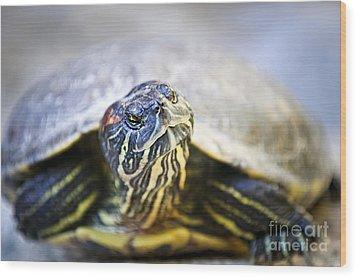 Turtle Wood Print by Elena Elisseeva