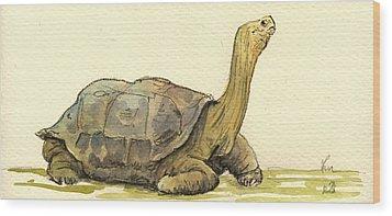 Turtle Galapagos Wood Print