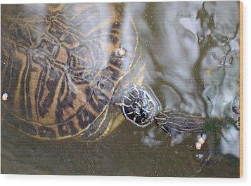 Turtle Kiss Wood Print by Julie Cameron