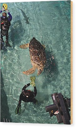 Turtle - National Aquarium In Baltimore Md - 121217 Wood Print by DC Photographer