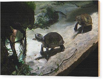 Turtle - National Aquarium In Baltimore Md - 121218 Wood Print by DC Photographer