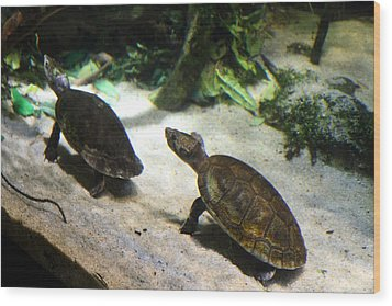 Turtle - National Aquarium In Baltimore Md - 121219 Wood Print by DC Photographer