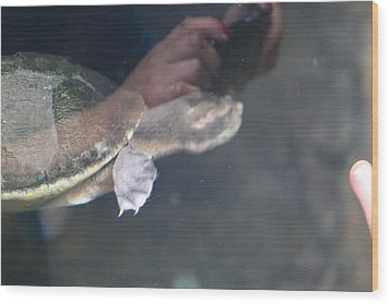 Turtle - National Aquarium In Baltimore Md - 121223 Wood Print by DC Photographer