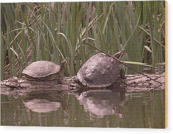Turtle Struggling To Rest On A Log With Its Buddy Wood Print by Jeff Swan