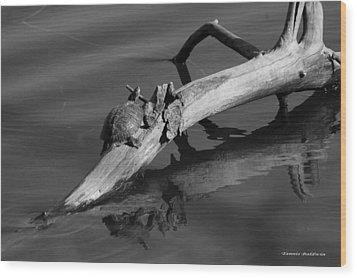 Wood Print featuring the photograph Turtle Sun Bw by Tannis  Baldwin