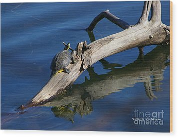 Wood Print featuring the photograph Turtle Sun by Tannis  Baldwin