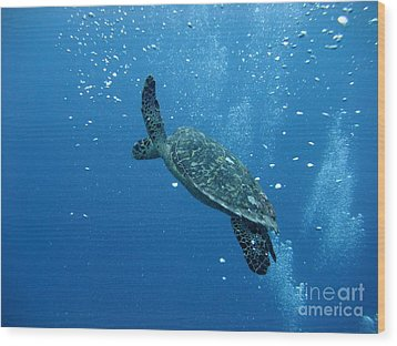 Turtle With Divers' Bubbles Wood Print by Alan Clifford