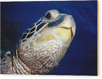 Turtles 1 Wood Print by Dawn Eshelman