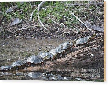Turtles Wood Print by Terrance Byrd