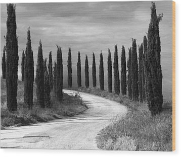 Wood Print featuring the photograph Tuscan Cedars by Hugh Smith