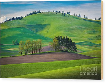 Tuscan Palouse Wood Print by Inge Johnsson