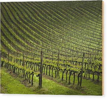 Tuscan Vineyard Series 1 Wood Print