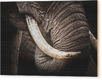 Tusks And Trunk Wood Print by Mike Gaudaur