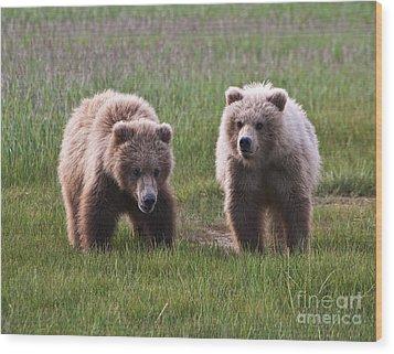 Twin Bear Cubs Wood Print