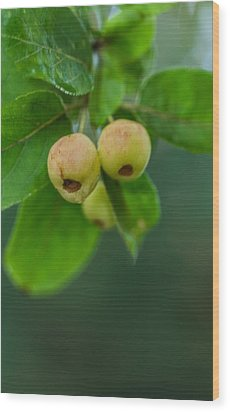 Wood Print featuring the photograph Twin Berries by Jacqui Boonstra