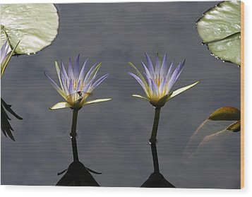 Twin Blue Egyptian Lotus Waterlilies And Dragonfly Wood Print by Byron Varvarigos