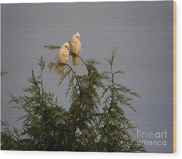 Twin Cockatoos Wood Print by Bev Conover