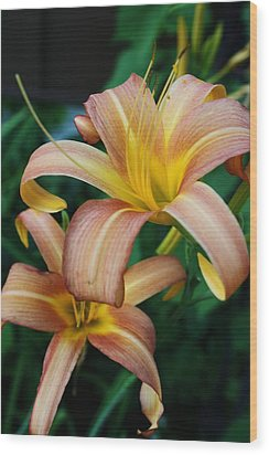 Wood Print featuring the photograph Twin Daylilies by Bruce Bley