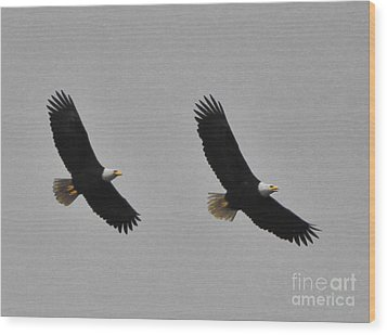 Twin Eagles In Flight Wood Print