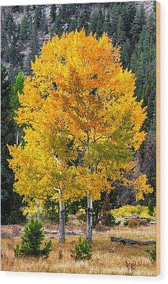 Twin Fall Trees Wood Print
