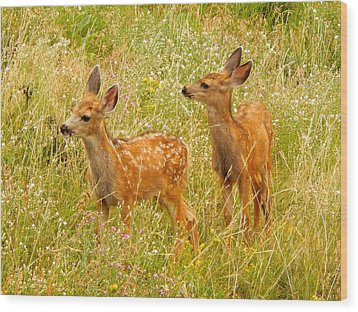 Twin Fawns Wood Print by Dan Miller