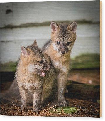 Twin Fox Kits Wood Print by Paul Freidlund