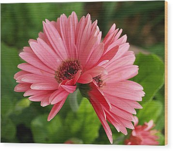 Wood Print featuring the photograph Twin Gerber Daisies by Susan Crossman Buscho