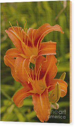 Twin Orange Trumpet Lilies Wood Print by MaryJane Armstrong
