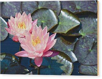 Two Pink Waterlilies Wood Print