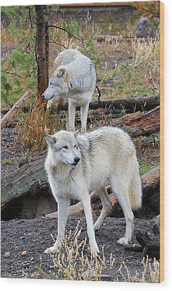 Twin Wolves Wood Print by Athena Mckinzie