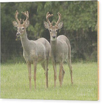Wood Print featuring the photograph Twin Young Bucks by Jim Lepard