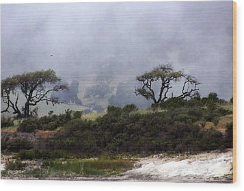 Twins In  The Fog Wood Print by Gary Brandes