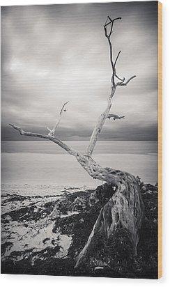 Twisted Wood Print by Adam Romanowicz