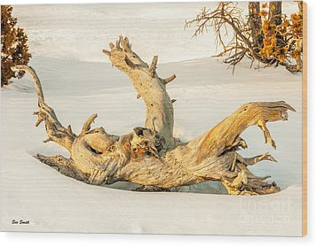 Twisted Dead Tree Wood Print by Sue Smith