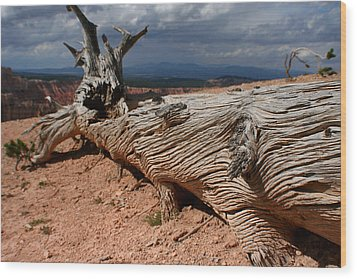 Wood Print featuring the photograph Twisted by Jon Emery