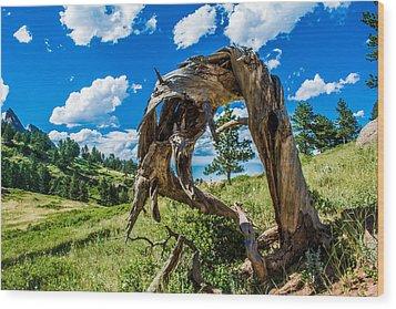 Twisted Pine Wood Print by Rhys Arithson