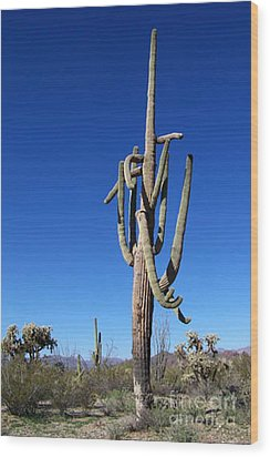 Twisted Sentinal Wood Print by Kathy McClure