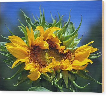 Twisted Sunflower Wood Print by Gail Butler