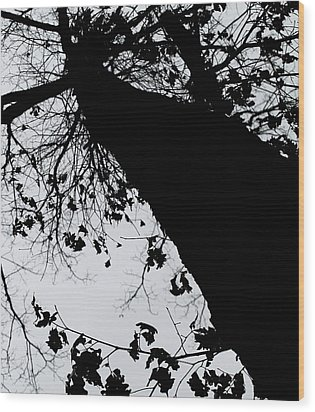 Wood Print featuring the photograph Twisted Tree by Candice Trimble