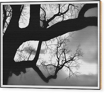 Twisty Tree Silhouette Wood Print