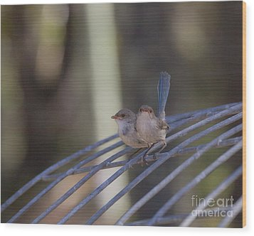 Two Birds On Wire Wood Print by Serene Maisey